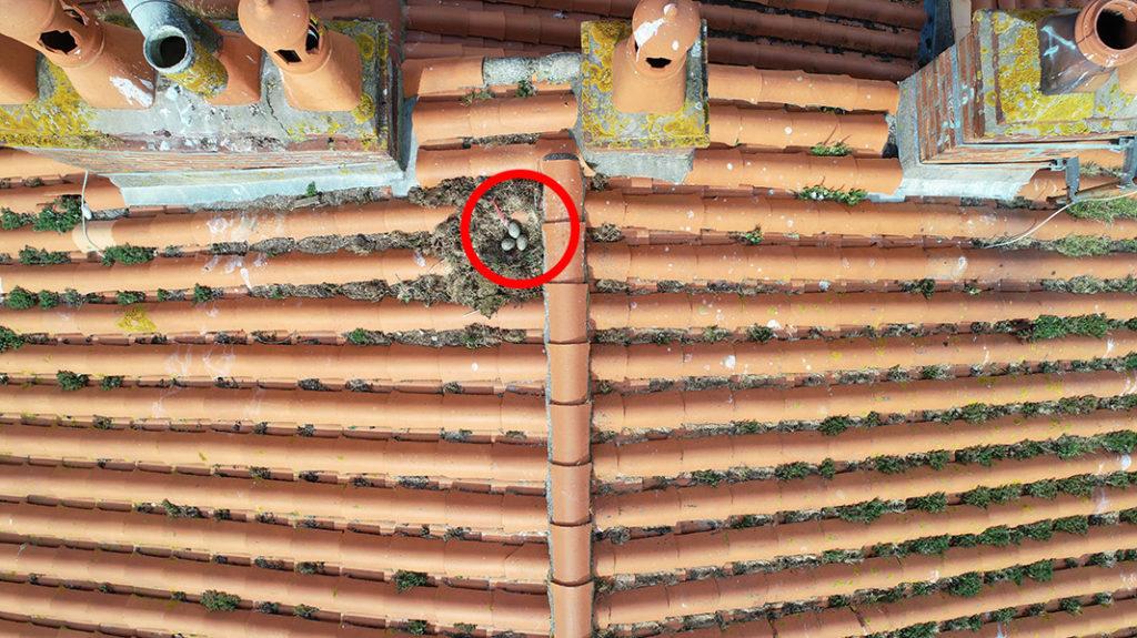 nid avec oeufs de goelands sur toit